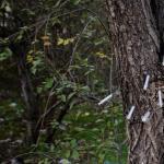 On. Grimoldi e on. Rondini (Lega Nord) – Milano, interrogazione a ministro Minniti per chiedere rinforzo organico polizia per boschetto della droga a Rogoredo